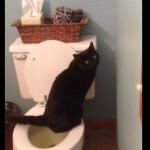 訓練をしてトイレで用を足す事を覚えた賢い黒猫さん