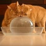 氷のボールを楽しむ10匹の猫さん♪