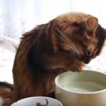 おててで水を飲む猫さん♪
