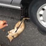 車の修理をしようとすると邪魔をする子猫さん