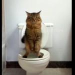 人間用のトイレで用を足すネコさん、きばる時のポーズがカワイイ(^◇^)