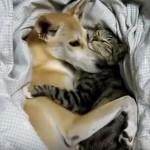 抱き合って寝る仲良しな猫さんとワンちゃん