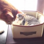 シルバーシート?!年配のネコに席をゆずる優しいニャンコ