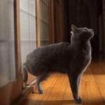 [連打] ネコが戸をトントンするそのスピードが凄い