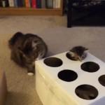 モグラたたきではなく、子猫たたきで遊ぶ猫さん・・・(*'▽')