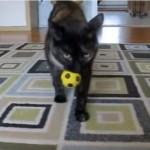 ボールを投げたら「ニャンニャン」言いながらとってくるネコちゃんが可愛い♪