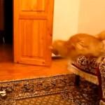 スーパーマリオのジャンプ音に連動して飛ぶ猫さん