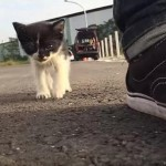 「助けてニャ・・・」野良猫の子猫がどこまでもついてくる