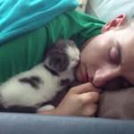 [熟睡] ご主人に寄り添ってキスをしながら寝る子ニャンコ
