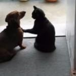 ワンちゃんの胸に手をかざすと動きが止まる、魔法の力を持つ猫さん