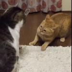 一触即発にらみ合う猫ちゃん達、可愛すぎる攻撃にほっこり