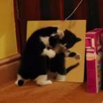 子猫が鏡で自分を見つけてビックリする姿がキュート♪