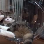 透明なベッドでくつろぐ猫さん(まるちゃん)