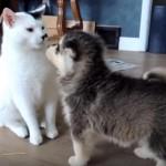 二匹の子犬の里親代わりになった優しい猫さん