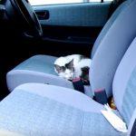 朝起きて、車ででかけようとしたら、運転席に猫ちゃんが寝ていた(^◇^)
