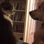 シェルター(動物避難所)からやってきた猫さん、先住犬と見つめあいすぐに仲良くなる♪