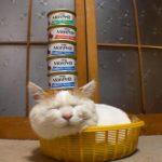 のせ猫とモンプチタワー