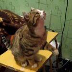「ここをこうやってなでるニャン♪」なでなで指導を行う猫さん