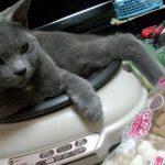 〔画像〕 鍋をしようとしたら猫さんが邪魔をしたのでフタをしたら・・・カワイイ姿になった