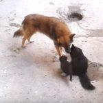 昔からの友達であるワンちゃんに、自分の子供を紹介する母猫