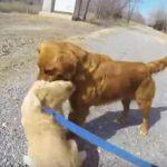 [感動] 別の家に引き取られた子犬と母犬との再会