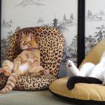 座椅子に座ってくつろぐ猫たちにほっこり(^◇^)
