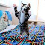 子猫が走ってきて飛びつく姿をスロー再生したら萌えた(*'▽')