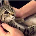 新しくやってきた子猫ちゃんに嫉妬して変な声で甘えまくる先住猫さん