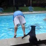人間をプールに突き落として遊ぶワンちゃん♪