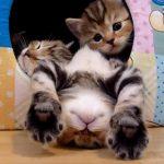 子ネコの寝顔を集めた動画集