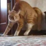 [動画9秒] 驚いておかしな動きで逃げる猫さん