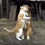 ワンコの事が好きでたまらないネコちゃん