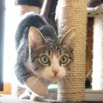 何かをみつけて、ロックオン中の猫さん