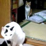 後ろから刺客に狙われているネコ