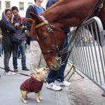 仲良くなりたい子犬の頑張りと優しくキスするお馬さん