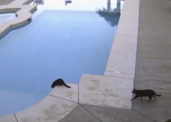 「猫さん!うしろ~!」プールを眺めている猫ちゃんの後ろから、猫ちゃんが忍び寄る・・・