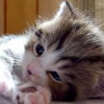 おててをパチパチ、拍手をするような子ネコちゃん♪