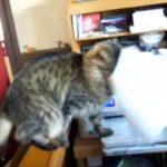 プリンターから出てくる紙をとってあげる猫ちゃん
