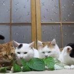 6匹の猫ちゃんの前に葉っぱを差し出したら、なぜかケンカになった(^◇^)