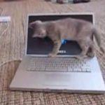 パソコンを使いこなしたい猫さん