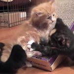 3匹の子ネコが遊んでるだけの動画に癒される♪
