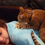 背中をマッサージする猫♪