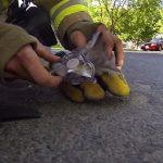 火災現場で意識がなく倒れていた子猫・・懸命の救助によって息を吹き返す一部始終