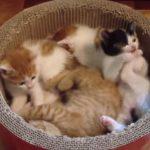 子ねこあつめ、子猫の特盛りはいかがでしょうか?