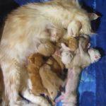 母猫とたくさんの子供達、みんなで寄り添って寝る♪