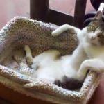 お風呂に入ってくつろぐおじさんのようなネコちゃん