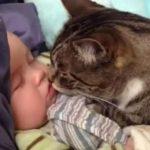 [総集編] 赤ちゃんと仲良しなネコちゃん