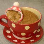 ティーカップに入った、ネコちゃんはいかがですか?