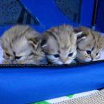 3匹のペルシャ猫の子猫ちゃん、外の世界に興味津々な姿がカワイイ♪