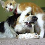 おもちゃに夢中なワンちゃんと、ワンちゃんと遊びたいネコちゃん